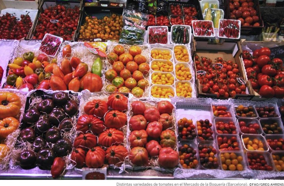 Cuidemos la biodiversidad por el medio ambiente, por la agricultura y también por nuestras dietas
