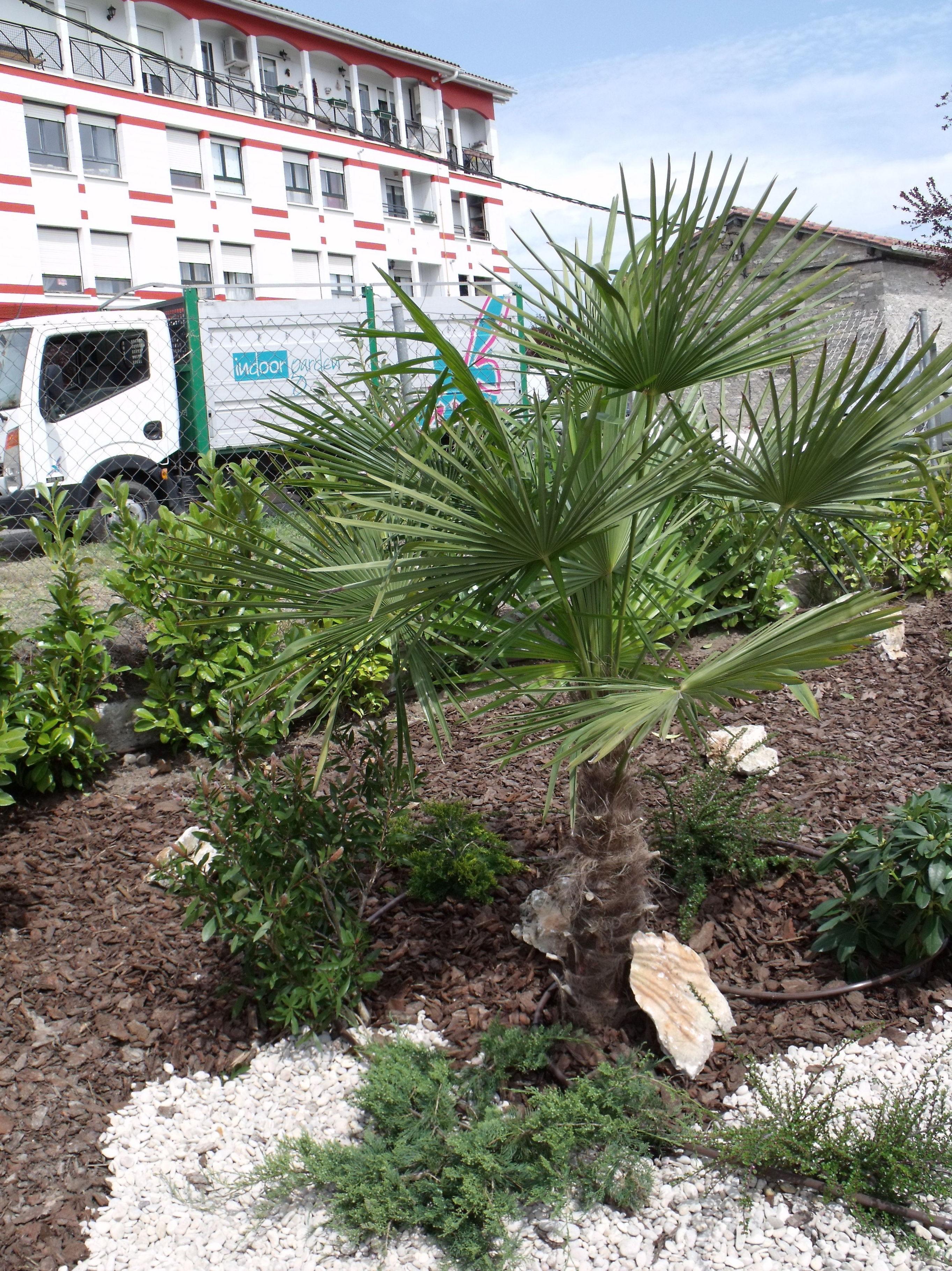 Foto 49 de Jardines (diseño y mantenimiento) en Vitoria-Gasteiz | Indoor Garden