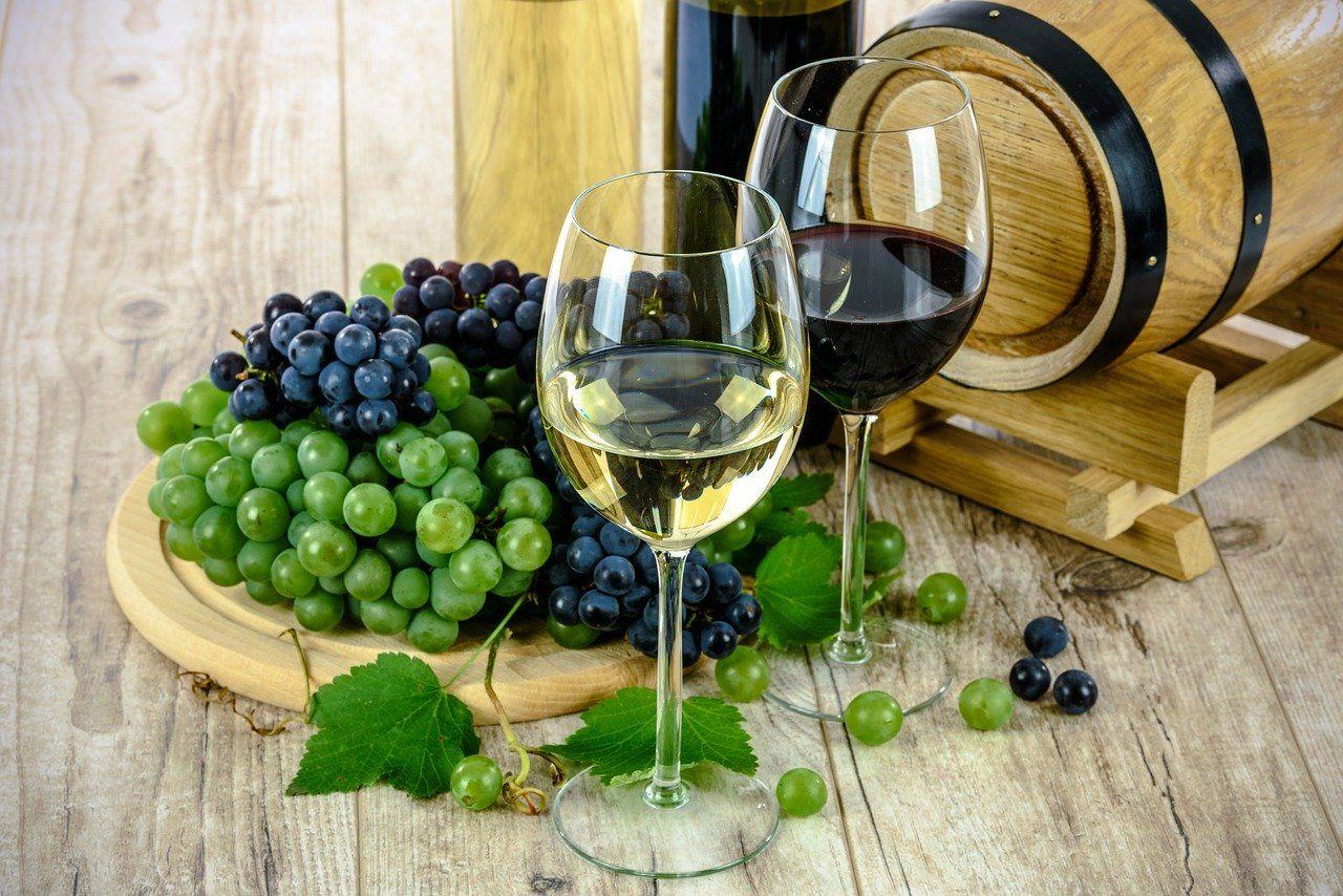 Prueba nuestros vinos