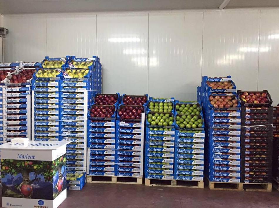 Distribución de frutas y verduras en Almería