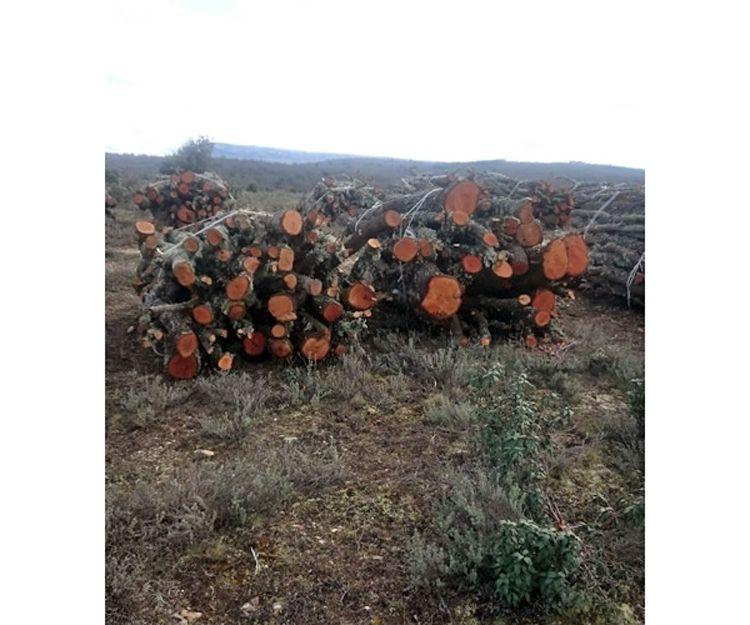 Distribución de leña en Soria