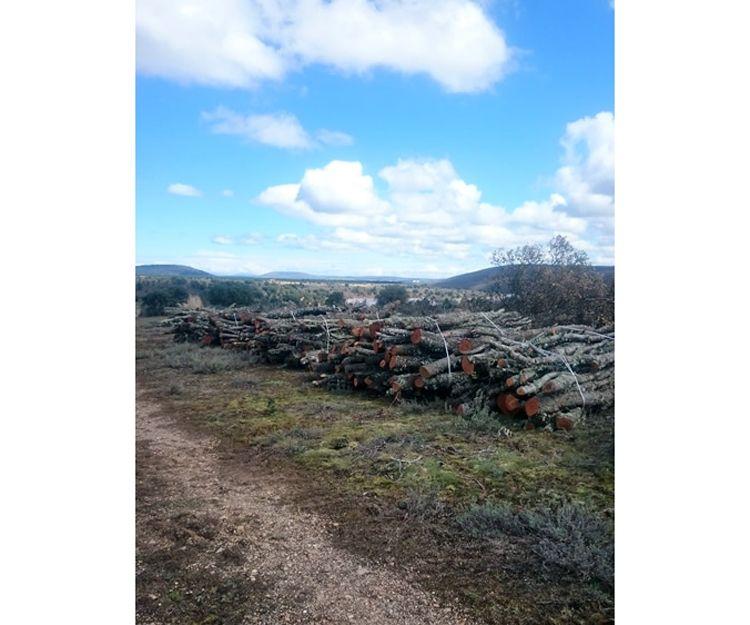 Venta de leña de campo en Soria