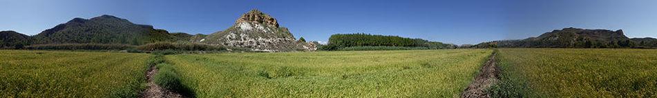 arroz calasparra denominacion de origen|arroces flor de calasparra