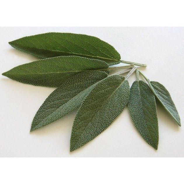 Salvia fresca: Productos de Mundifruit
