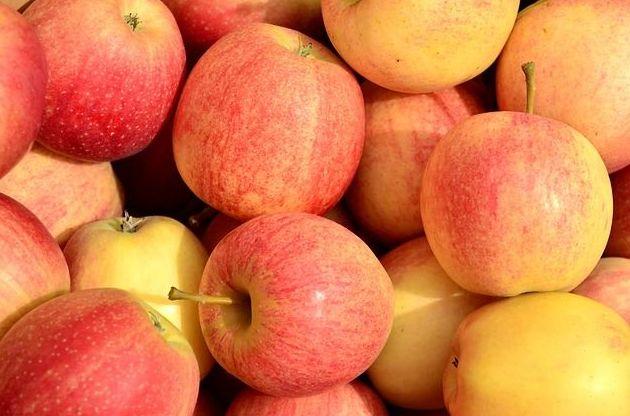 Manzana Golden: Productos de Mundifruit