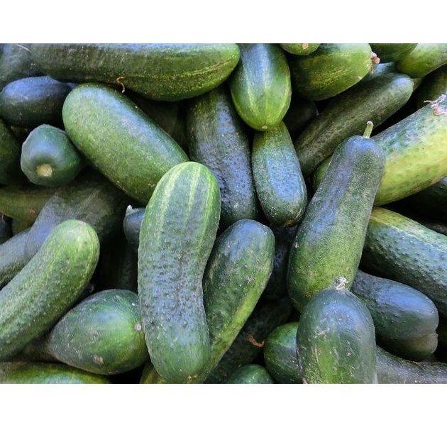 Pepinos: Productos de Mundifruit