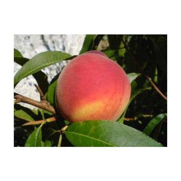 Melocotón : Productos de Mundifruit