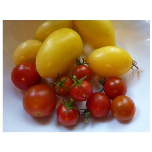 Tomates cherry: Productos de Mundifruit