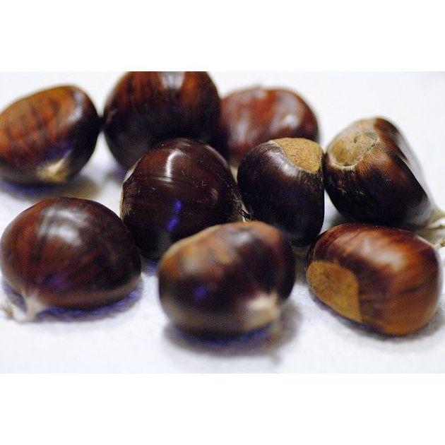 Castañas: Productos de Mundifruit