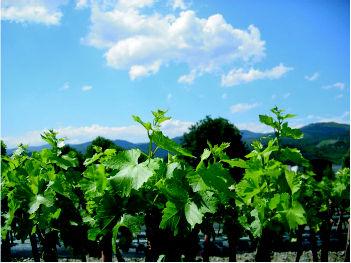 Foto 4 de Viveros agrícolas y forestales en  | Viveros José López