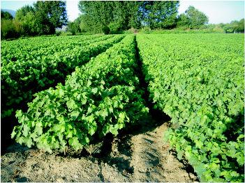 Foto 9 de Viveros agrícolas y forestales en  | Viveros José López