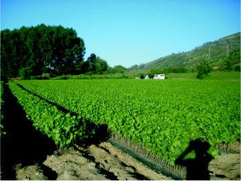Foto 10 de Viveros agrícolas y forestales en  | Viveros José López