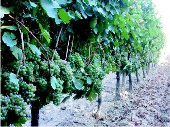 Foto 11 de Viveros agrícolas y forestales en  | Viveros José López