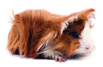 Foto 10 de Alimentos para animales en Alcalá de Henares | Planeta Azul