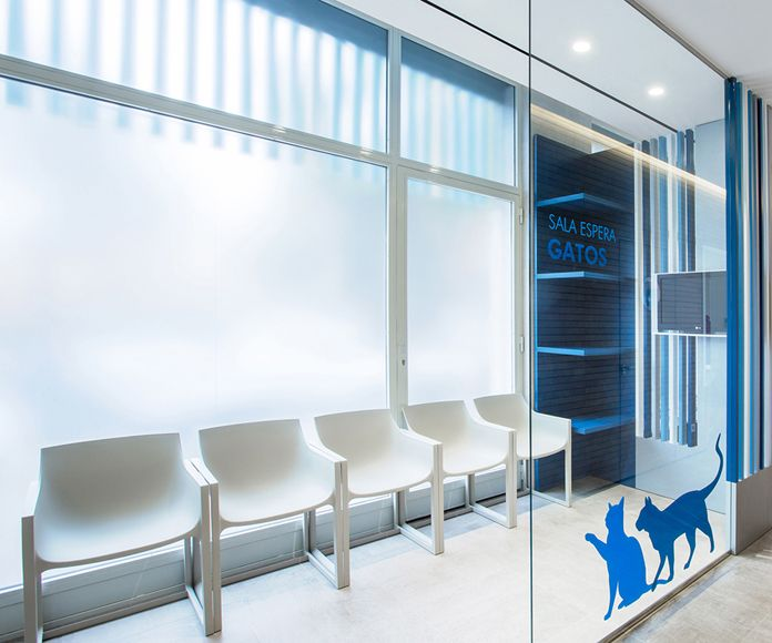 Sala de visitas para propietarios con animales hospitalizados