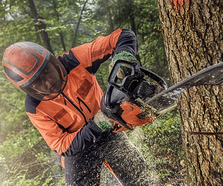 Tala de eucaliptos: Servicios de Forestal Cosio