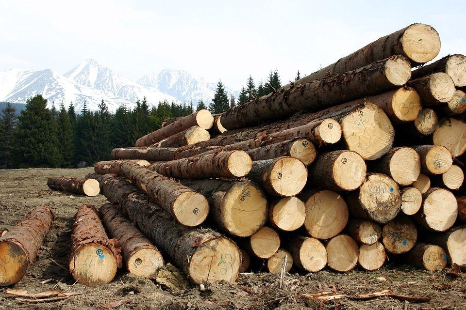Saca, carga y transporte de eucaliptos: Servicios de Forestal Cosio