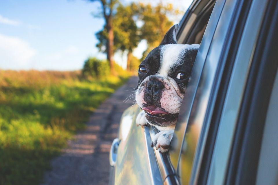 Admitimos mascota: Servicios de Taxi de Lujo