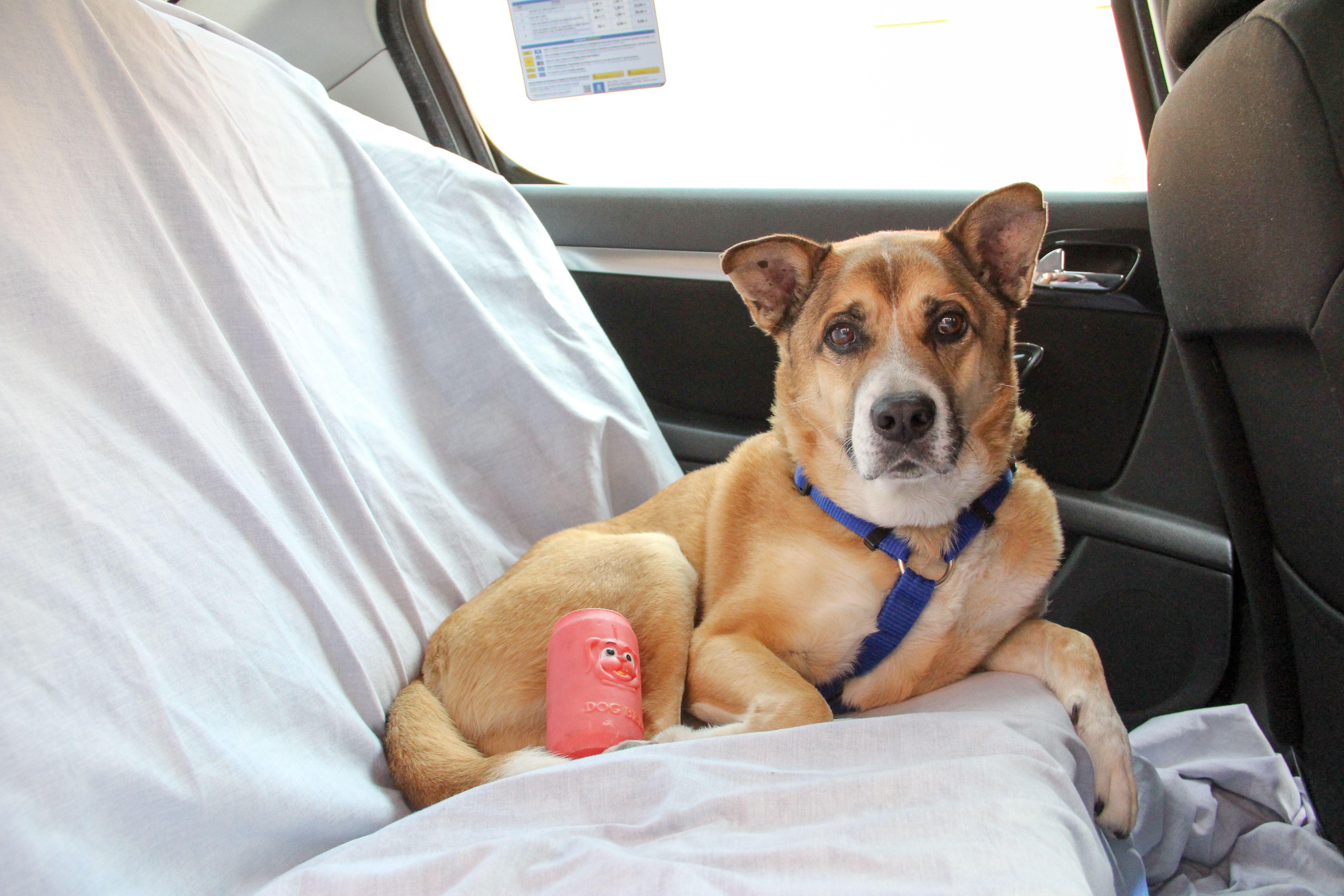 Taxis de lujo con asiento para mascotas en Navalcarnero