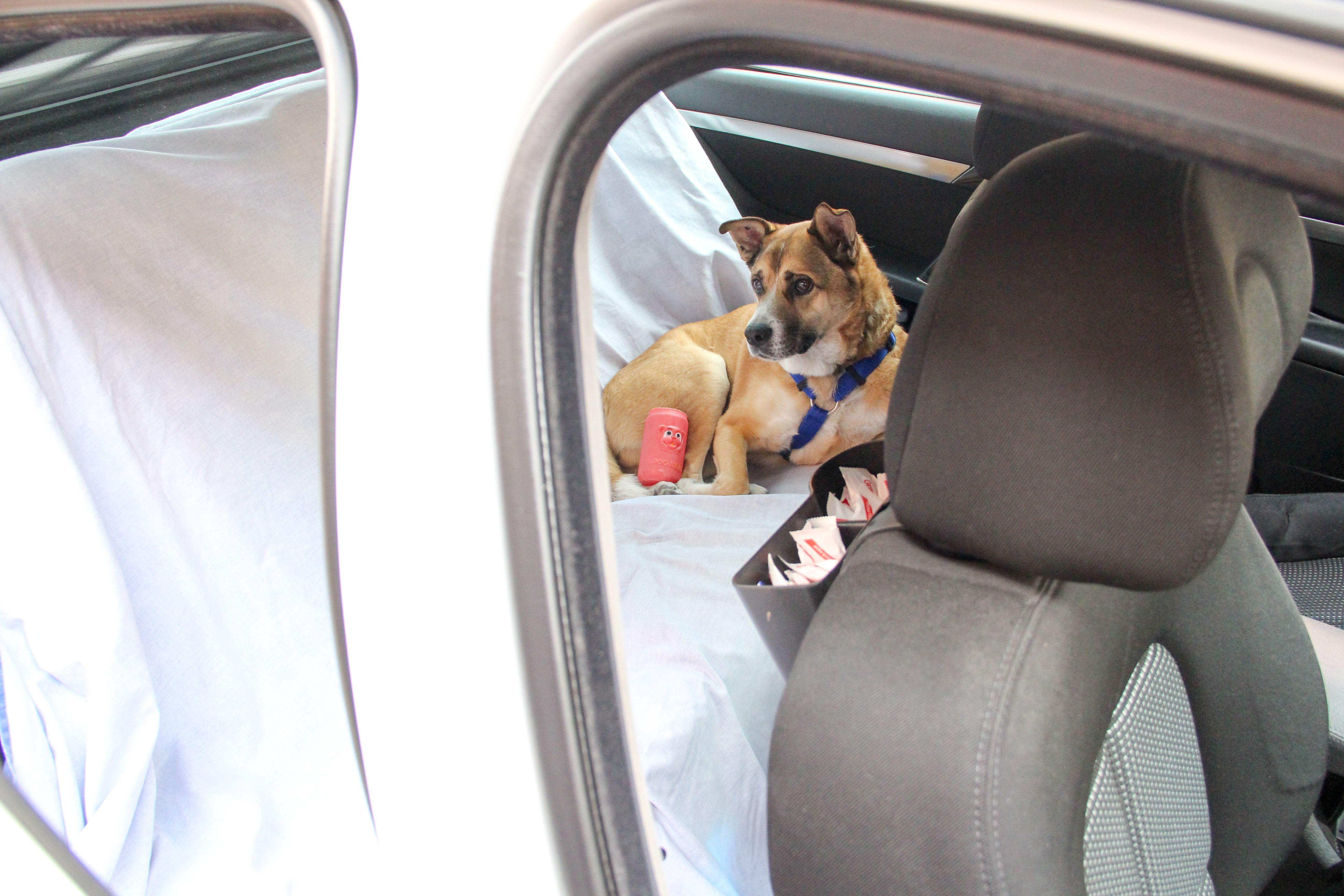 Taxis de lujo con asiento para mascotas en Leganés