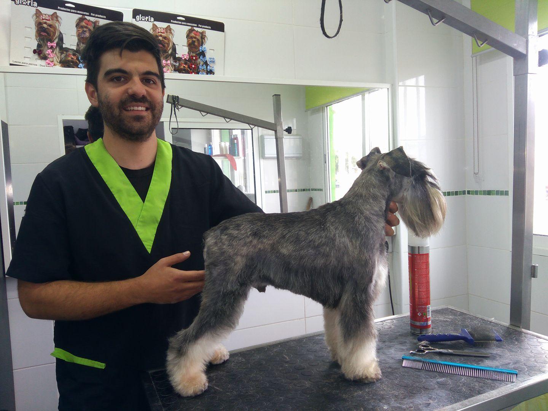 Peluquería canina y felina: Servicios y productos de Zoofari Estilisme Caní