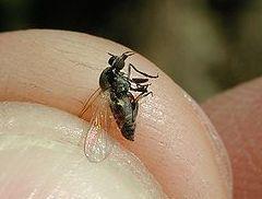 Mosquitos y moscas : Servicios  de Tresdes