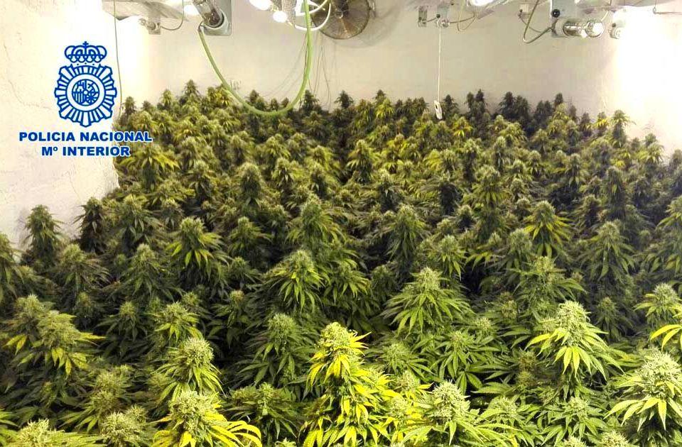 Desmanteladas plantaciones de cannabis en camión.
