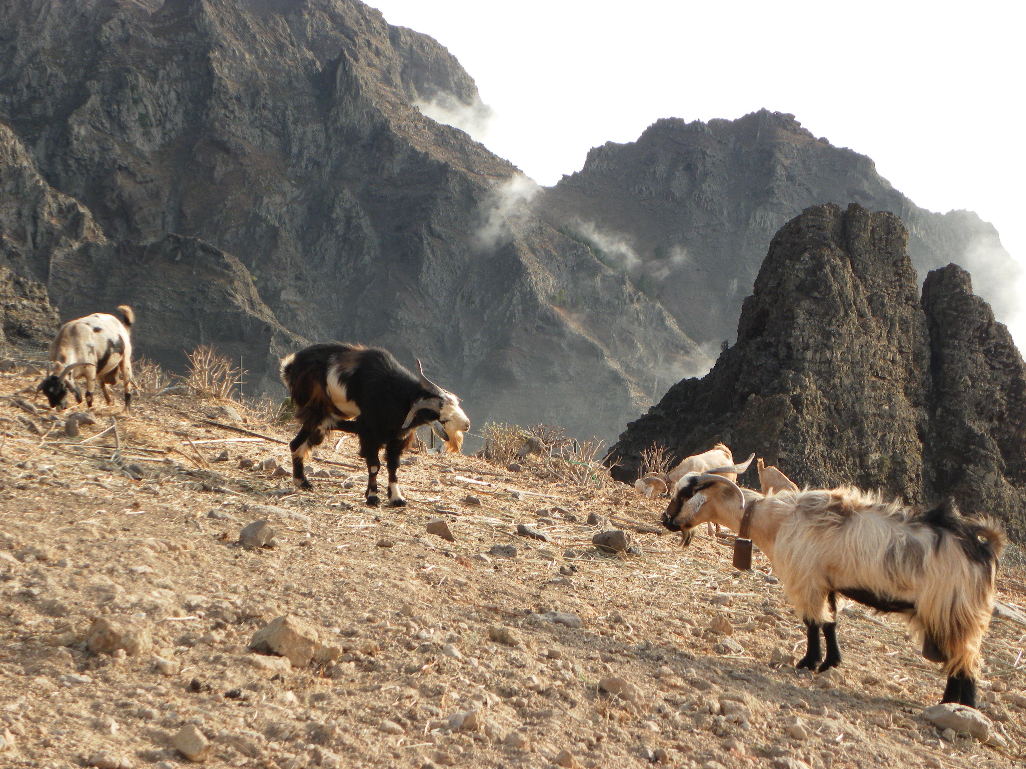Excursiones en Canarias