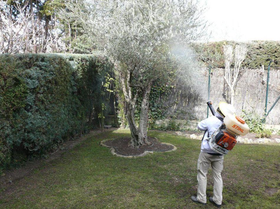 Control de plagas de jardín: Tratamientos   de Aravaca Control de Plagas