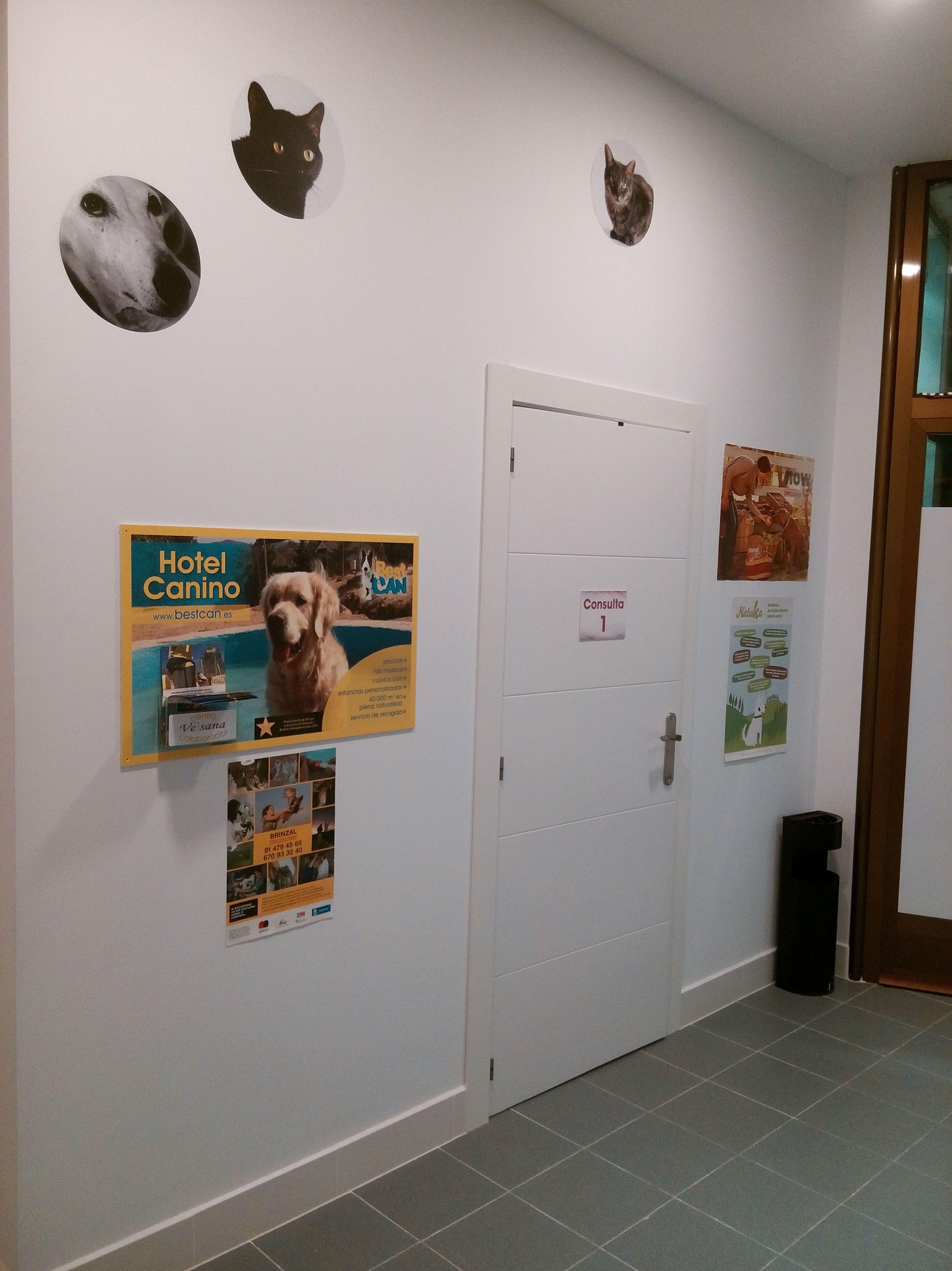 Acupuntura para animales en Moratalaz