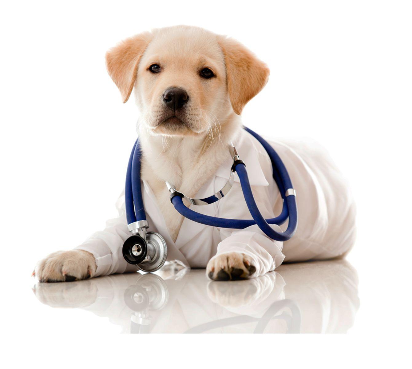 Medicina natural para animales en Madrid