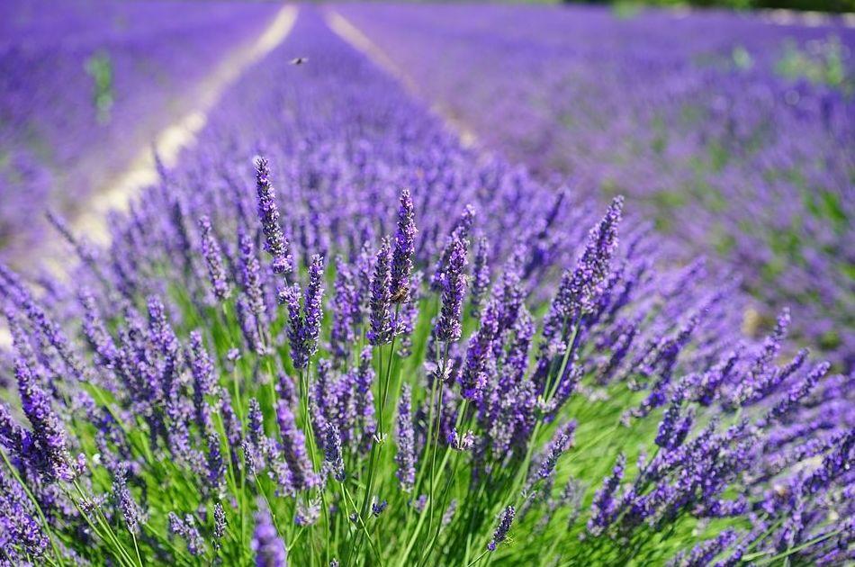 Aroma Natural de Plantas Aromáticas