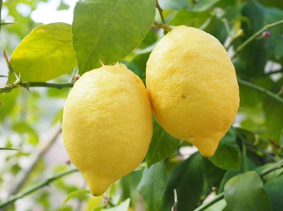 Aroma Natural de Limón