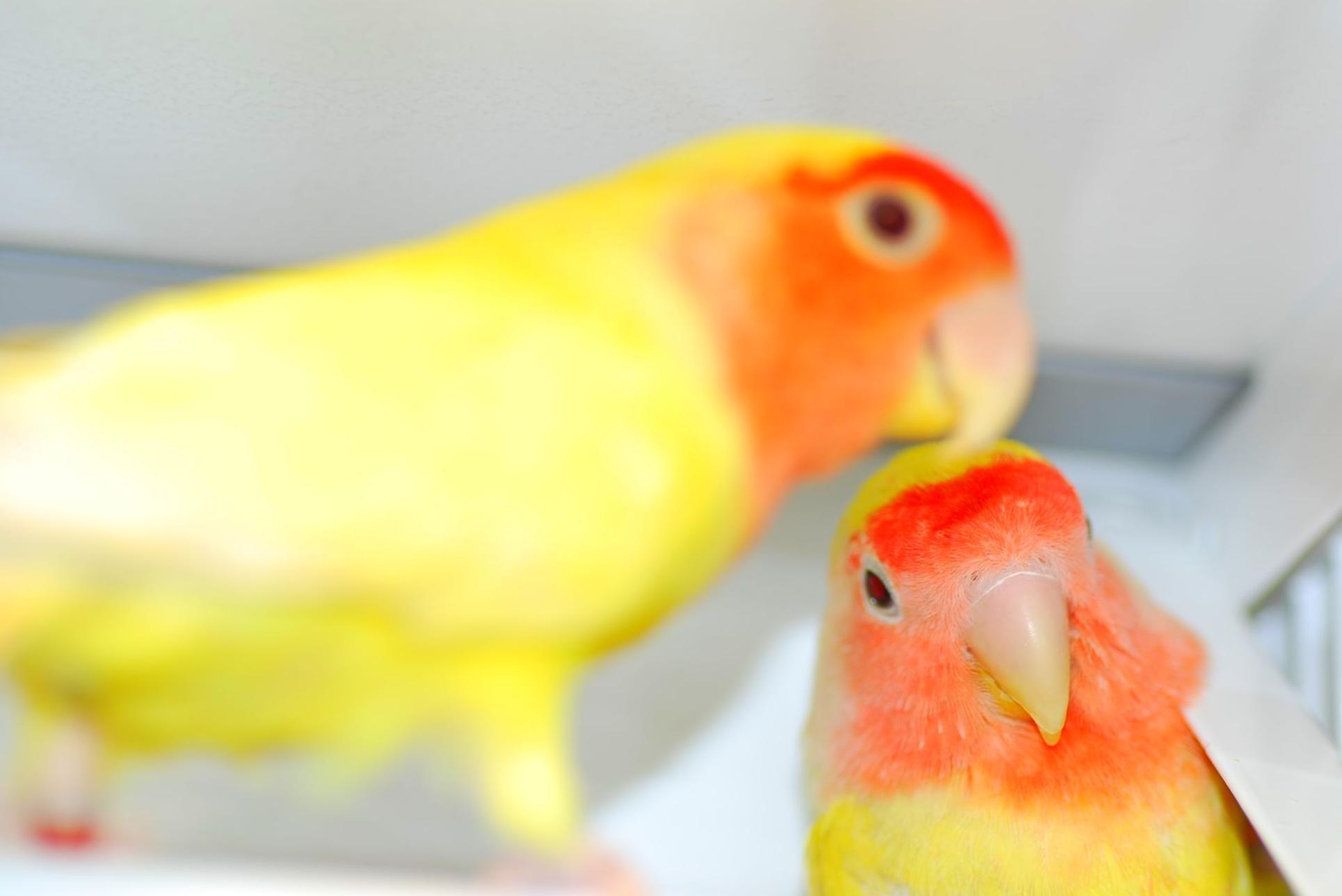 Pájaros: Catálogo de NATURIZOO