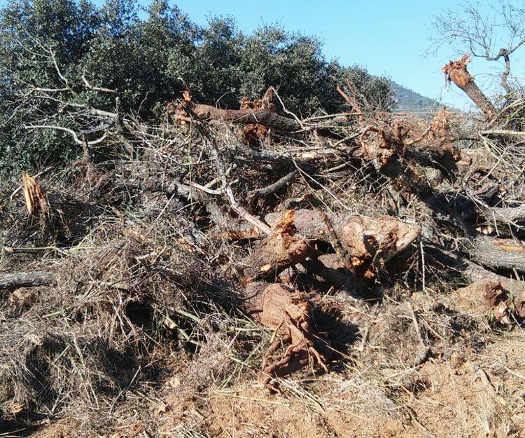 Conservación del medio ambiente en Castellón