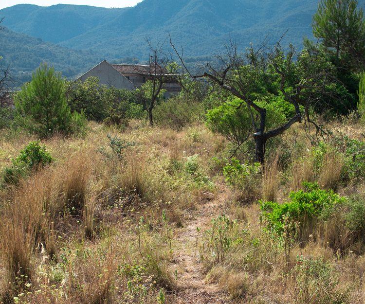 Agricultura ecológica en Castellón