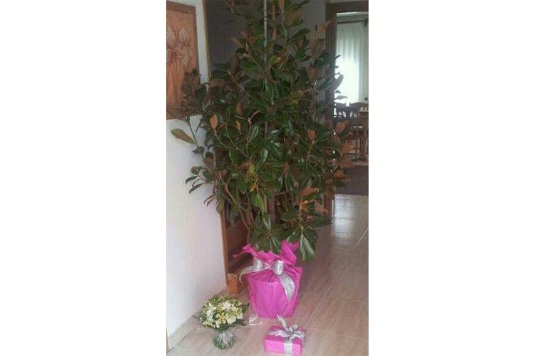 Flores y plantas en Madrid