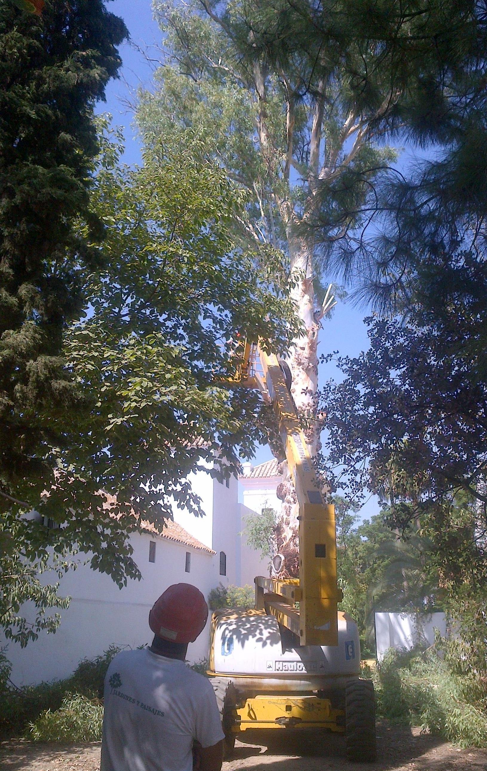 Foto 33 de Jardines (diseño y mantenimiento) en Sevilla  | Jardines y paisajes