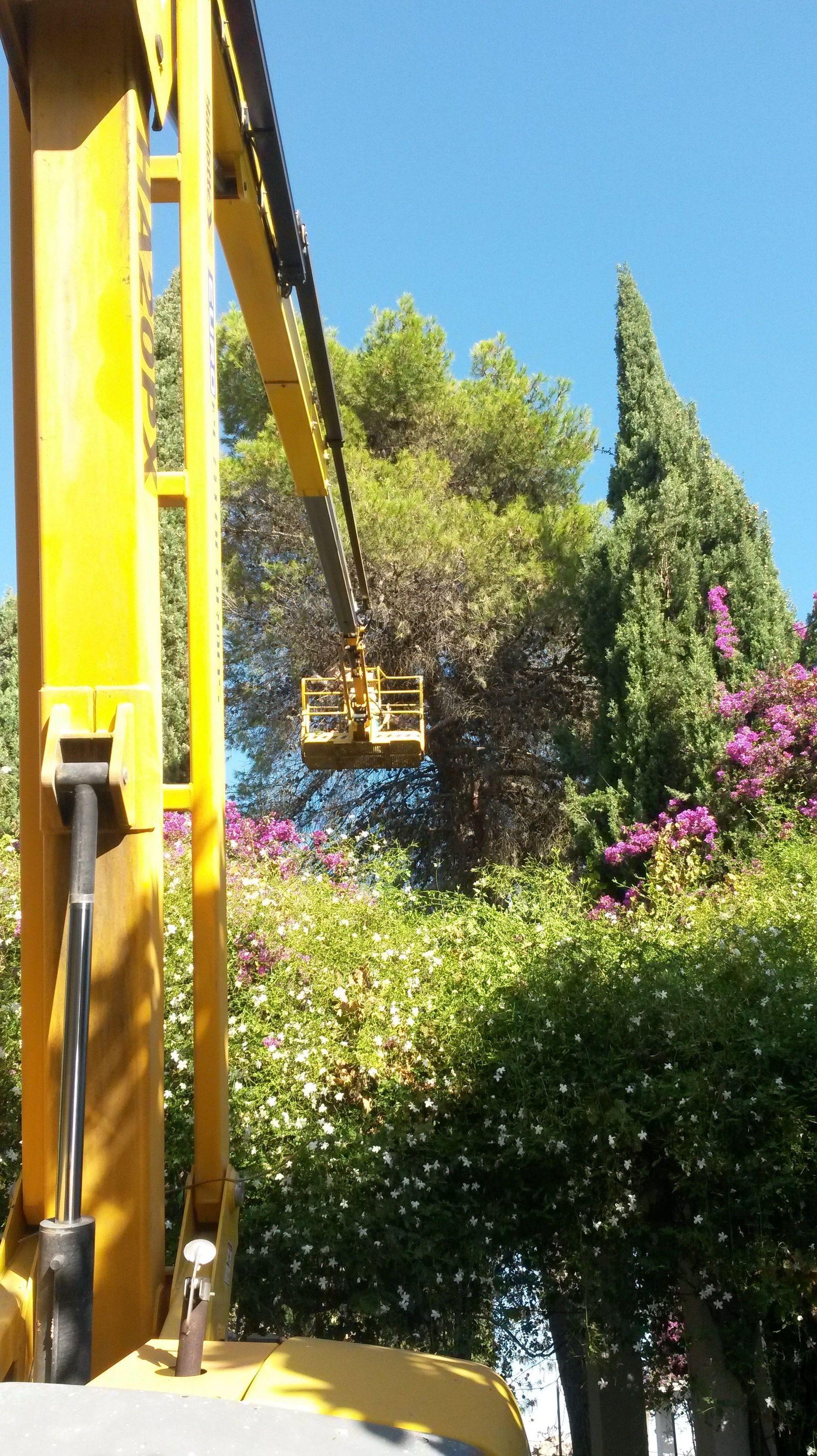 Foto 57 de Jardines (diseño y mantenimiento) en Sevilla  | Jardines y paisajes