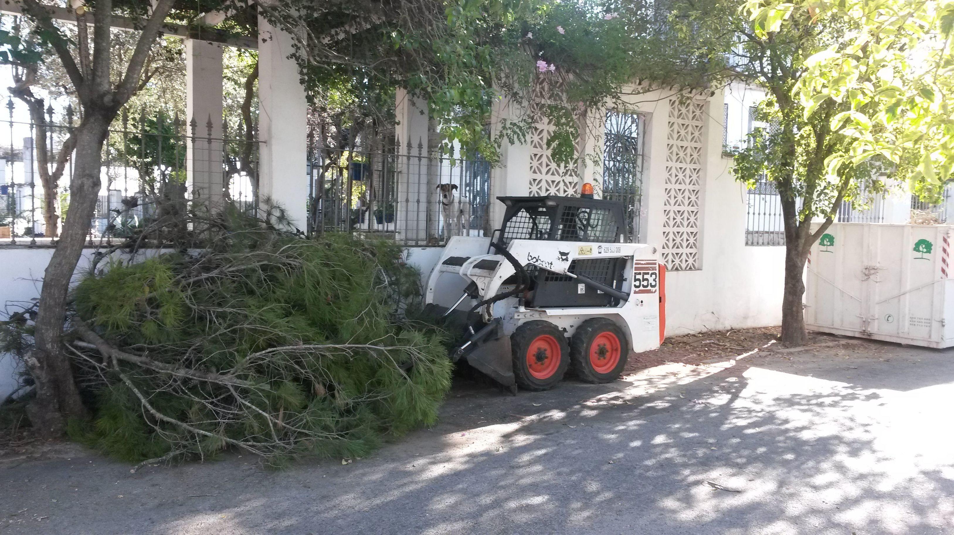 Foto 62 de Jardines (diseño y mantenimiento) en Sevilla  | Jardines y paisajes