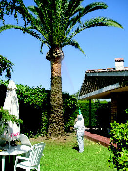 Foto 13 de Jardines (diseño y mantenimiento) en Sevilla  | Jardines y paisajes