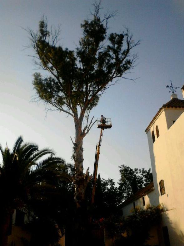 Foto 23 de Jardines (diseño y mantenimiento) en Sevilla  | Jardines y paisajes
