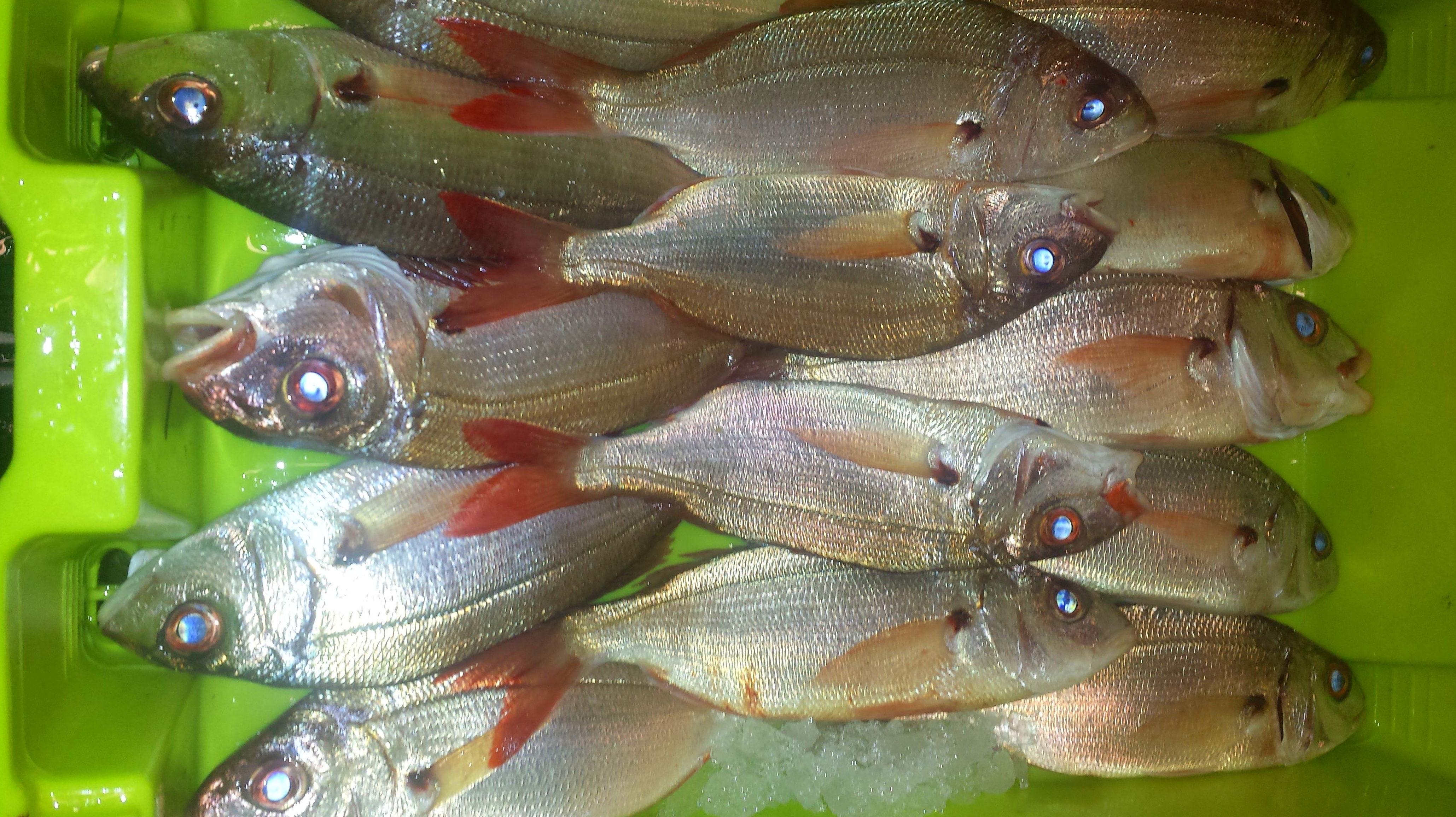 Foto 58 de Venta y distribución de pescados y mariscos del Cantábrico en Gijón | Pescastur