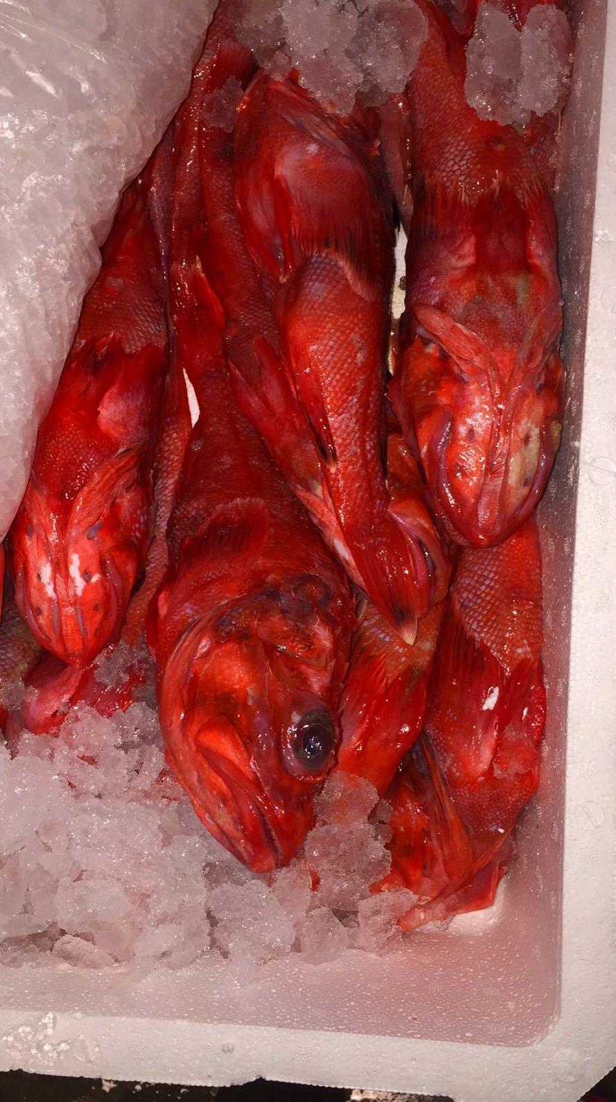Mayoristas de pescado fresco Asturias