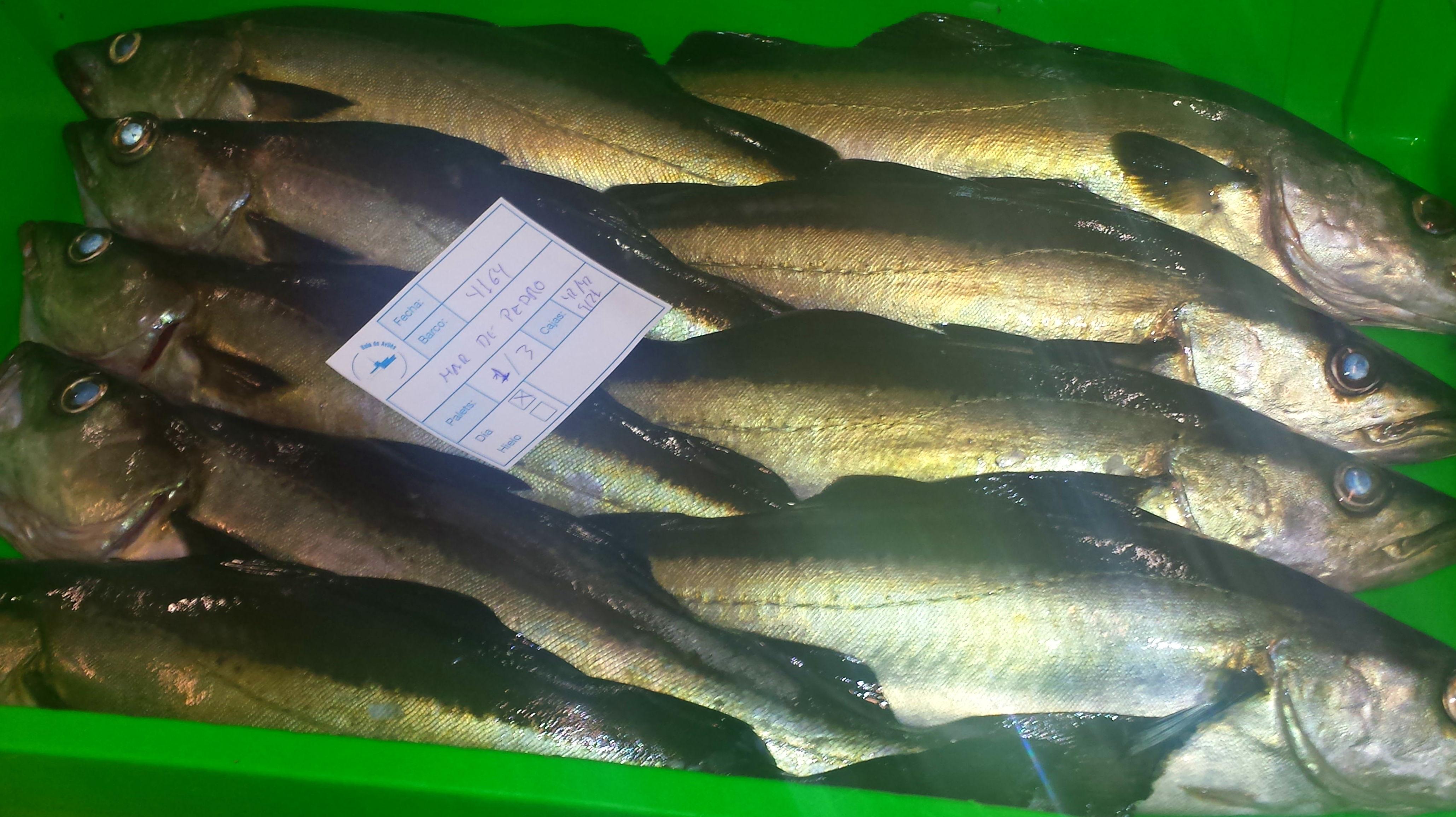 Foto 48 de Venta y distribución de pescados y mariscos del Cantábrico en Gijón | Pescastur