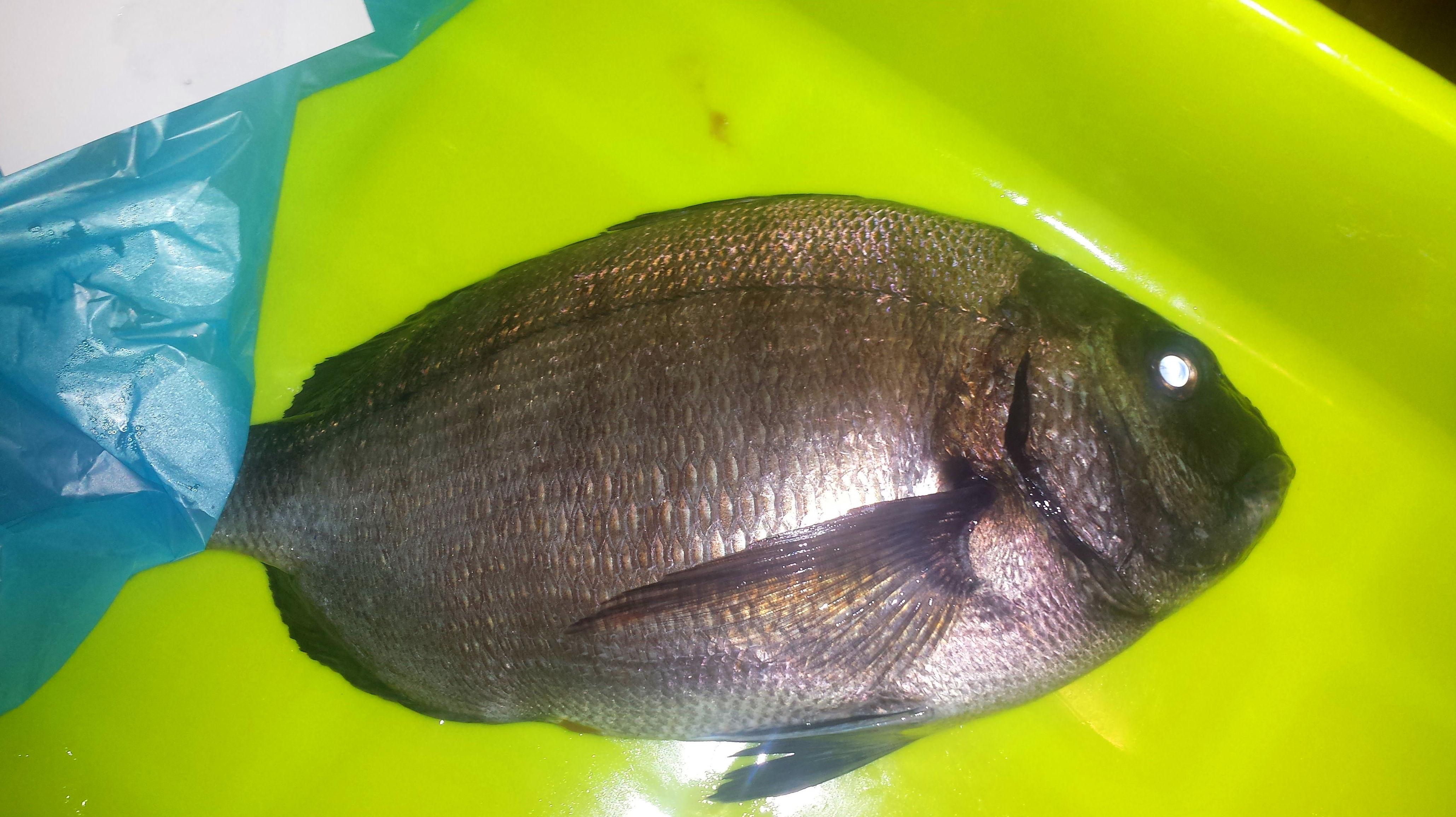 Sargo: SERVICIOS de Pescastur
