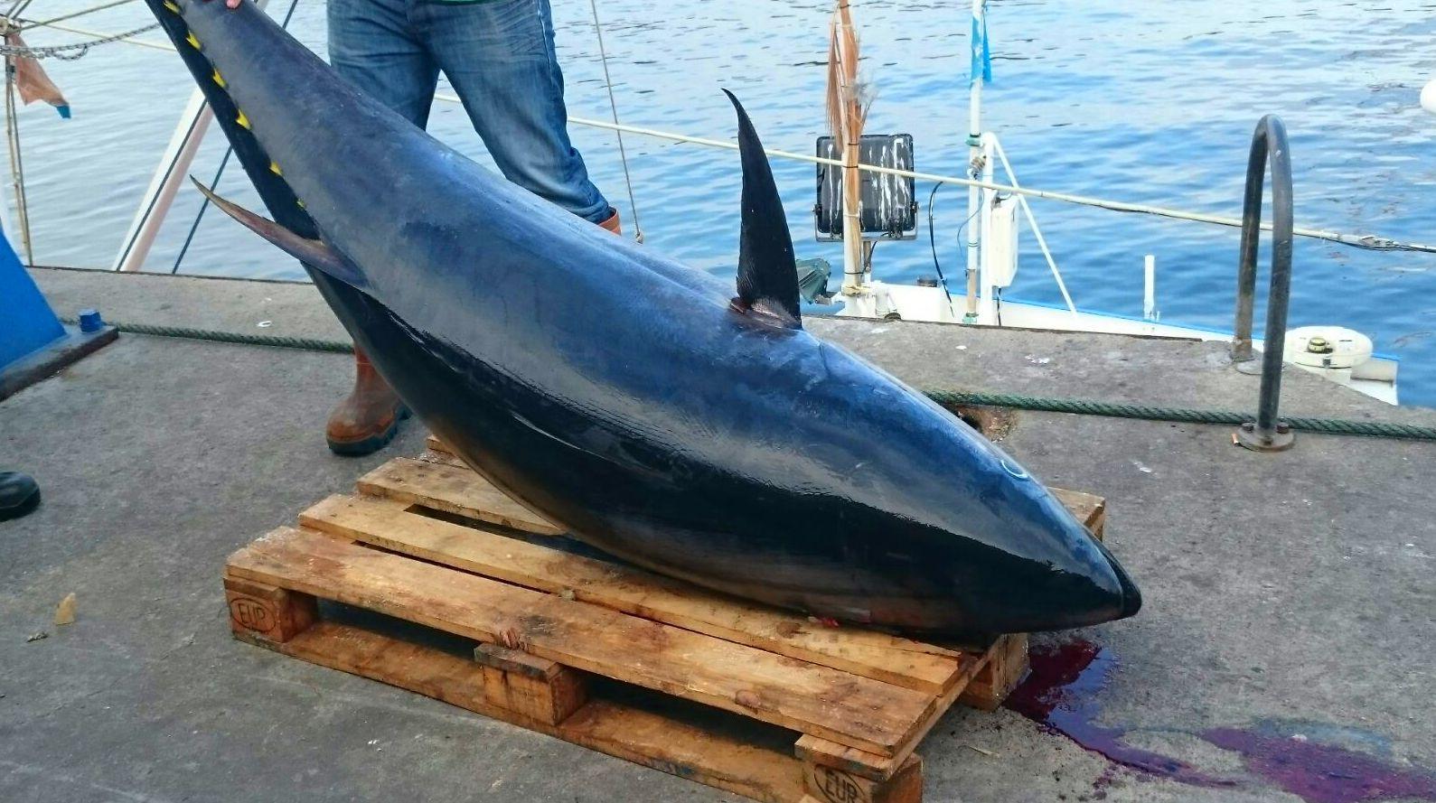 Foto 71 de Venta y distribución de pescados y mariscos del Cantábrico en Gijón | Pescastur
