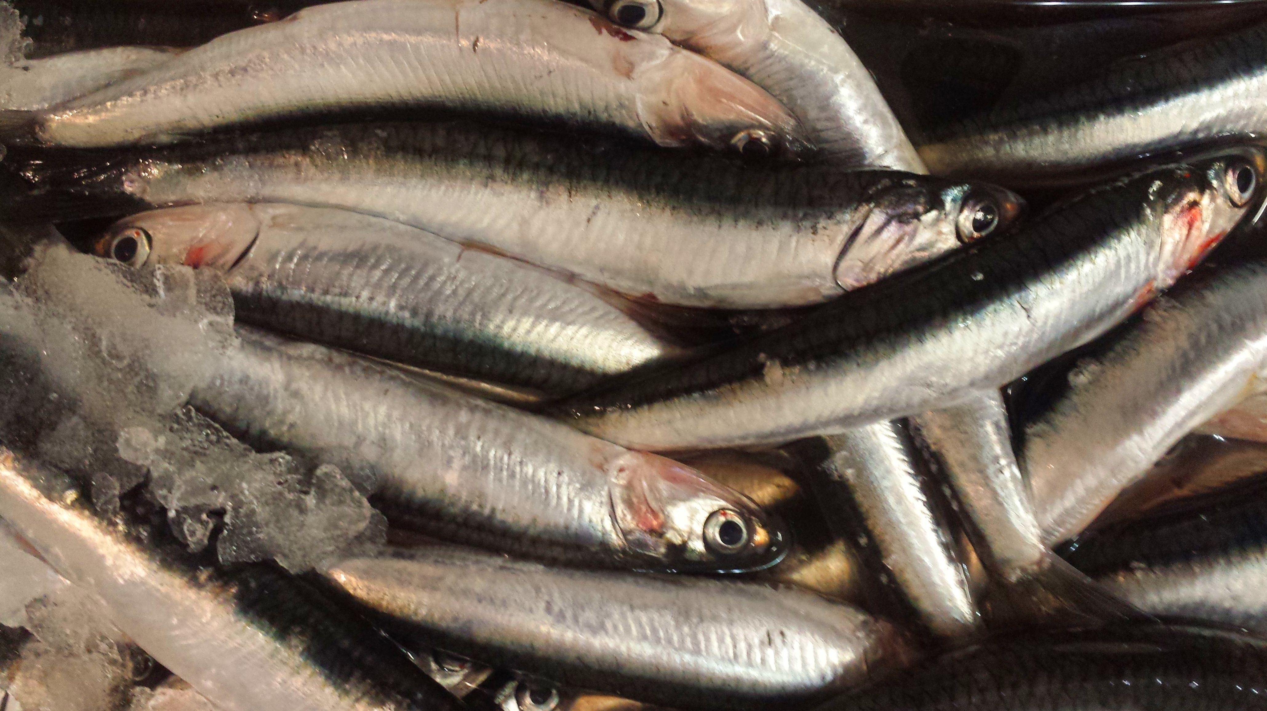 Foto 38 de Venta y distribución de pescados y mariscos del Cantábrico en Gijón | Pescastur