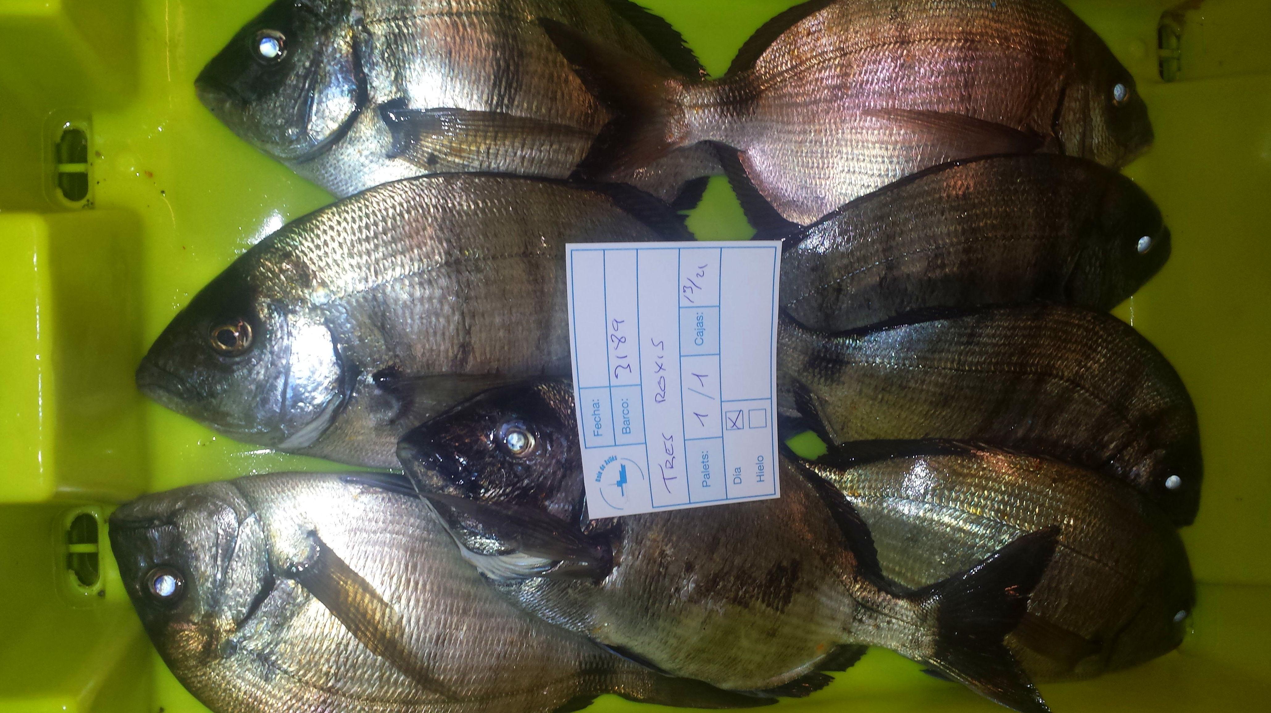 Foto 60 de Venta y distribución de pescados y mariscos del Cantábrico en Gijón | Pescastur