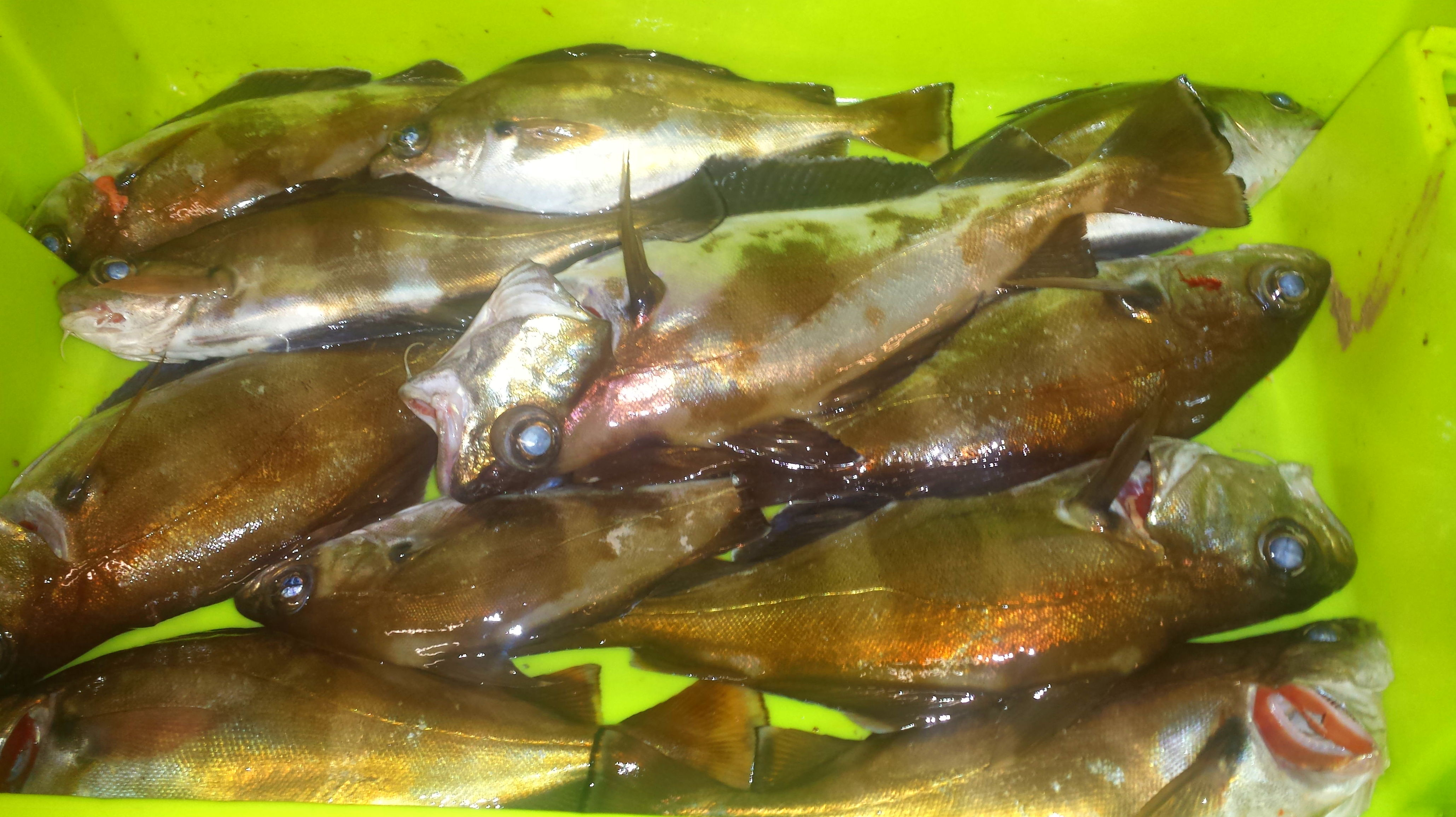 Foto 65 de Venta y distribución de pescados y mariscos del Cantábrico en Gijón | Pescastur